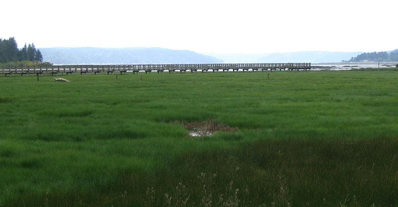 Mary-E.-Theler-Wetlands-2